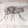 Drawing of a Fly by Mark Kretzmeier
